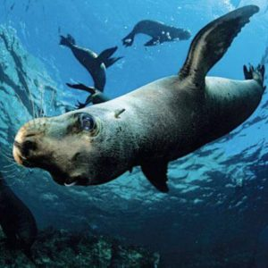 Galapagos Islands 7 Nights Diving